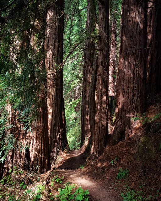Narrow milk chocolate redwood canopied trail, I love you. From the heart.